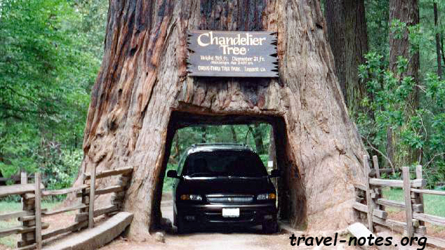 Chandelier drive through tree